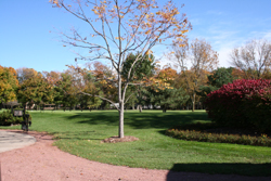 Golf Course Grounds 5