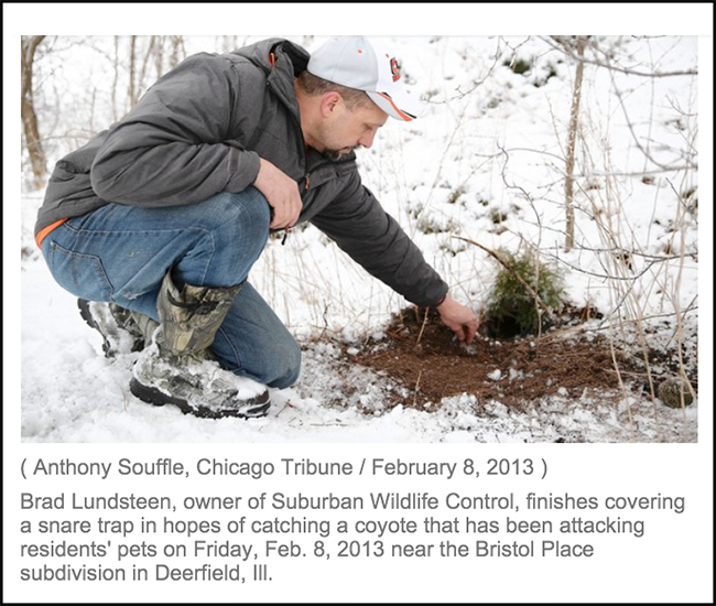 Bradin  Chicago Tribune Article February 8, 2014 on Coyote Concerns